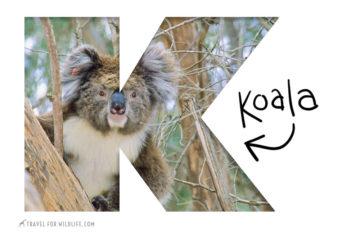 Animals That Start With U: Over 130 Animals, Photos - Travel