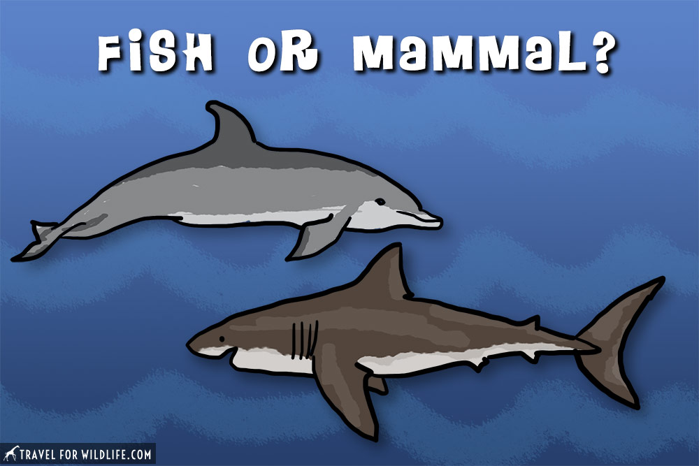 Are sharks mammals?