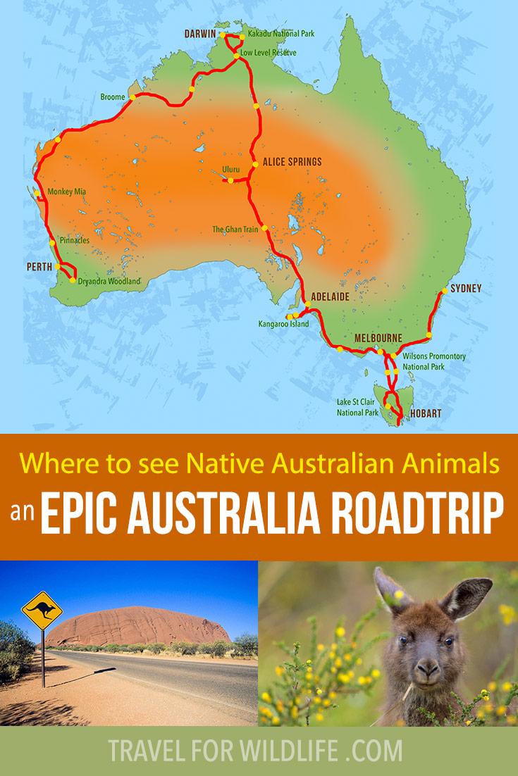 Where to see native Australian animals on an epic Australia roadtrip!