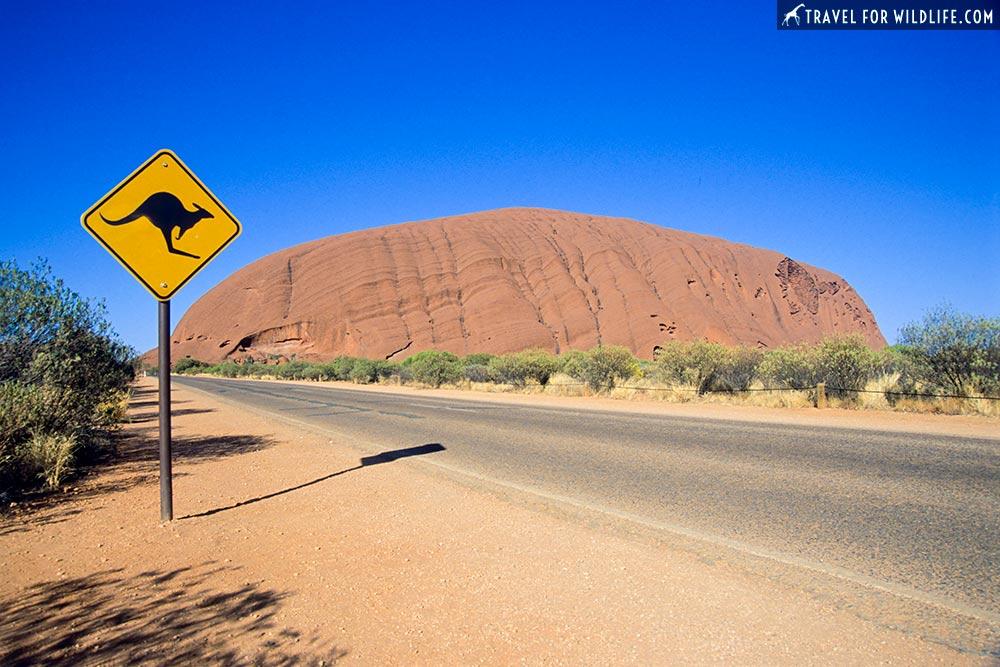 kangaroo crossing sign, Uluru, Australlia