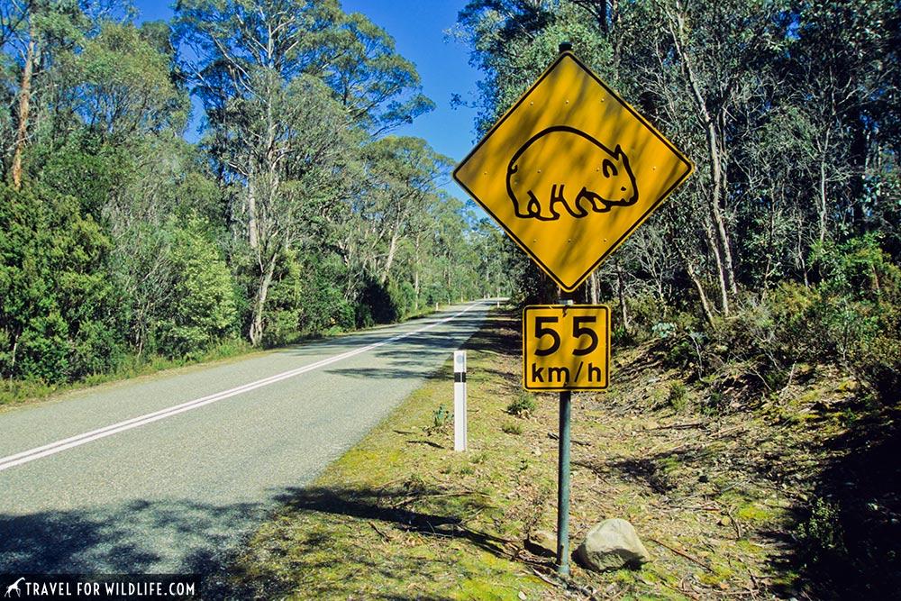 wombat crossing sign in Tasmania