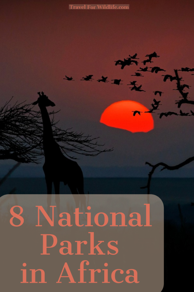National Parks in Africa for adventurers. How to visit them and what wildlife you'll see. #Africa #nationalpark #safari