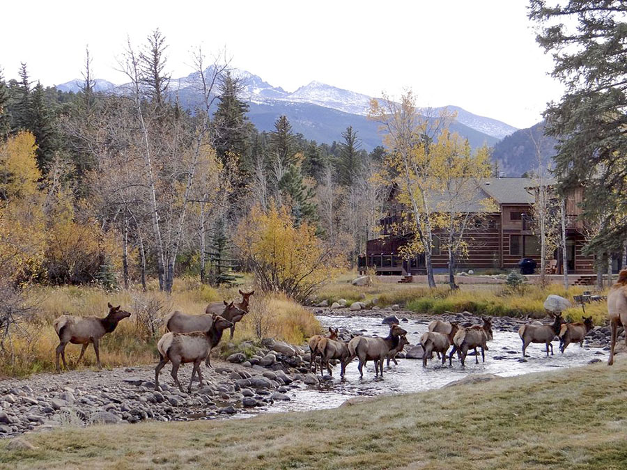 Watch elk from your cabin in Estes Park