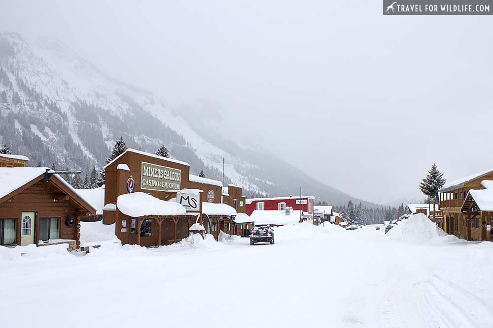 Cooke City, Montana in a snow storm