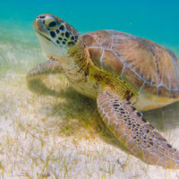 Donate To Save Baby Turtles — SEE Turtles