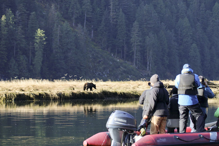 Bear watching in the Great Bear Rainforest