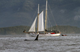 Sailing the Great Bear Rainforest