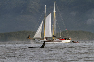 Sailing the Great Bear Rainforest