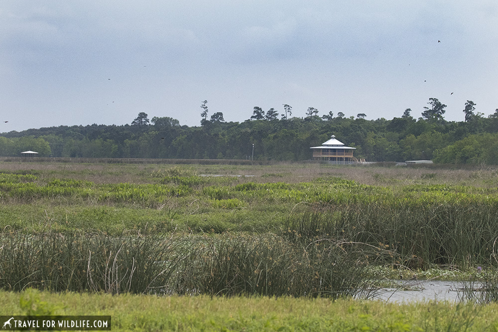 Marsh with Visitor center