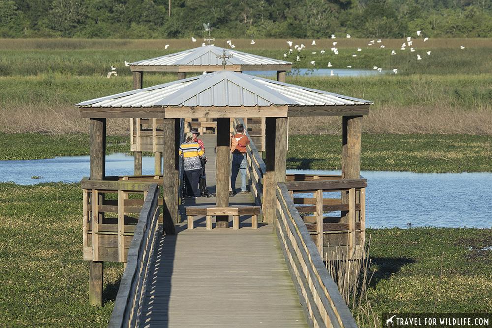 Boardwalk on a marsh