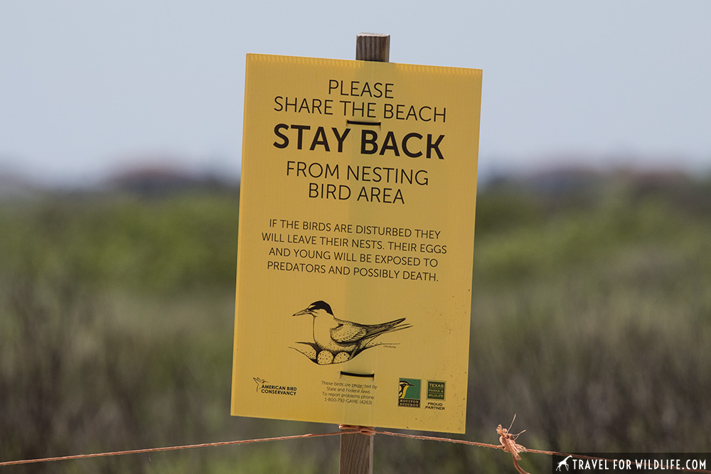 sign on a beach that reads: please share the beach. Stay back from nesting bird area