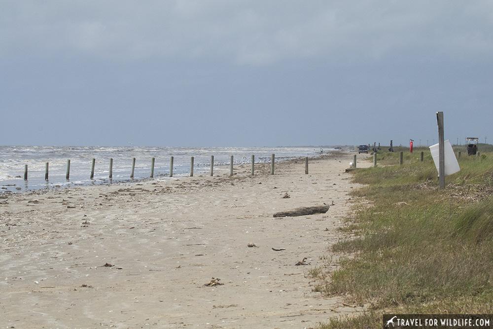 A beach at Sea Rim State park