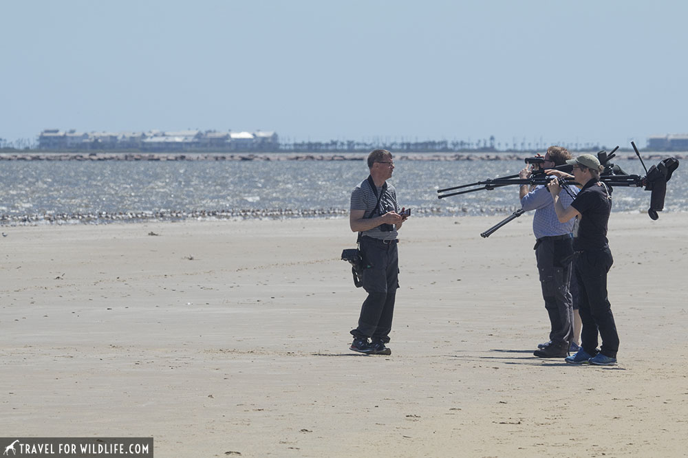 Birders carrying scopes on a beach during a birdwatching tour