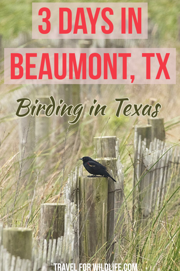 When you visit Texas don't forget the birds! I spent three days birding in Texas and we spotted over 200 birds! The little city of Beaumont is the perfect place to see all the migratory birds as it falls in the intersection of two of the four American flyways. Here is my list on where to go to see birds in Beaumont! #Texas #visitTexas #beaumont #birding
