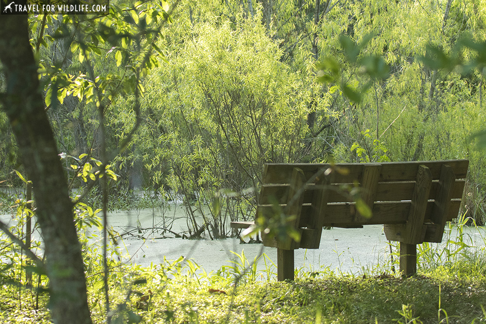Bench by a swamp