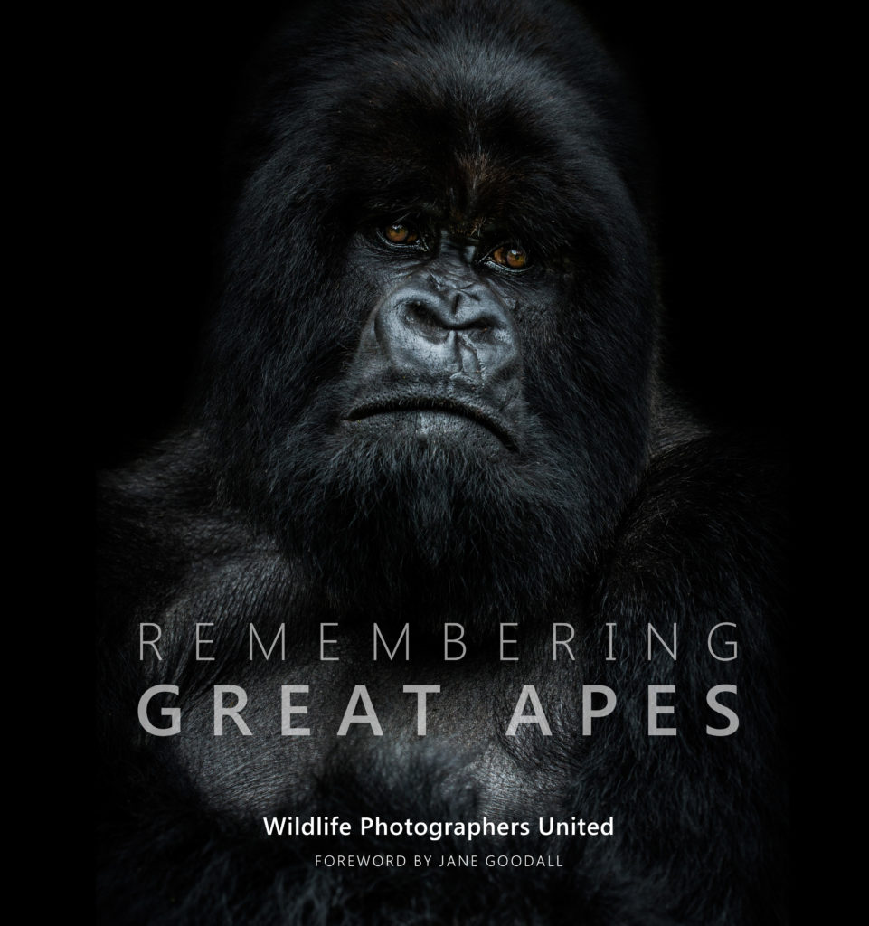 Remembering Great apes book cover