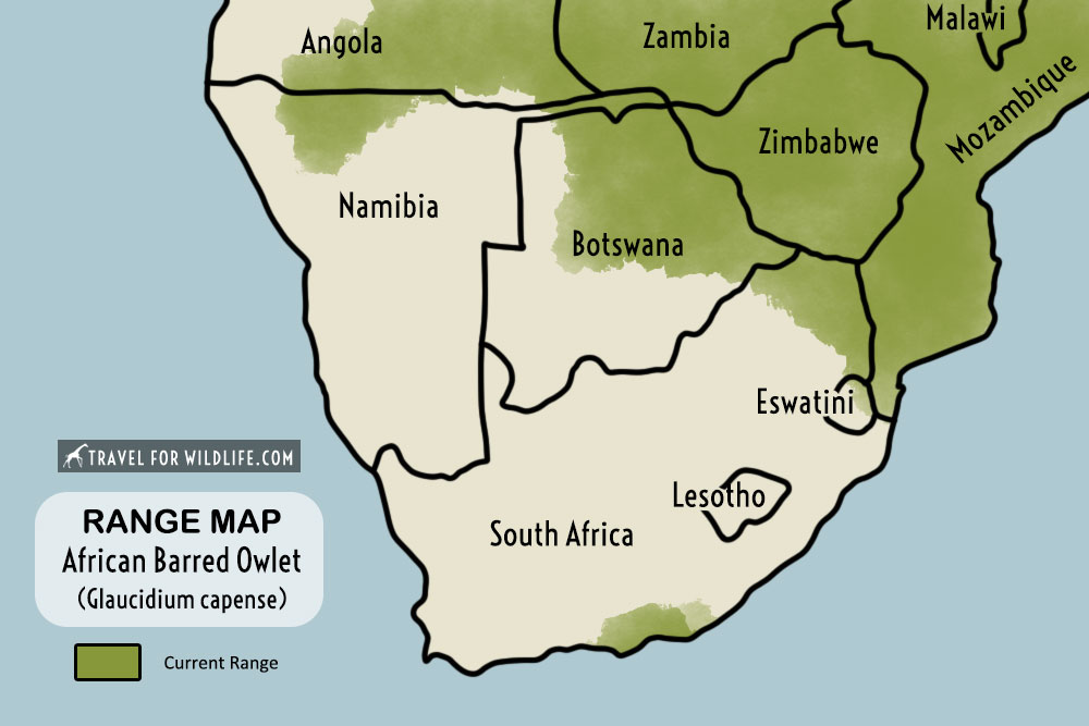 African barred owlet range map