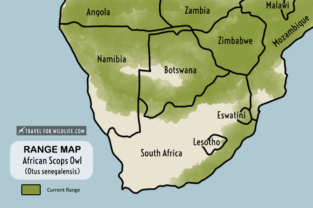 African Scops Owl range map