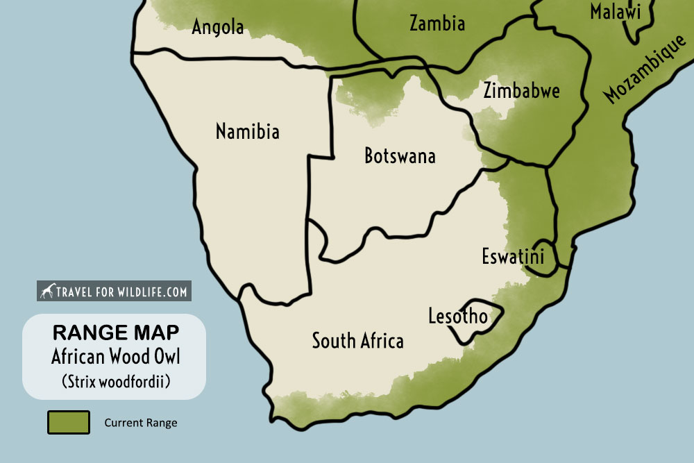 African wood owl range map