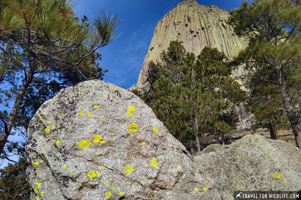 devils tower lichens