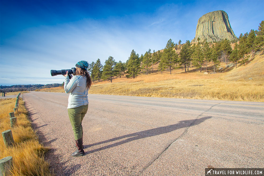 Devils Tower wildlife watching