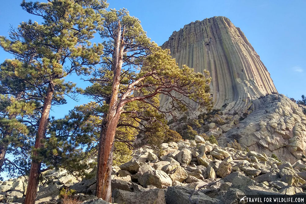 View of Devils Tower from base