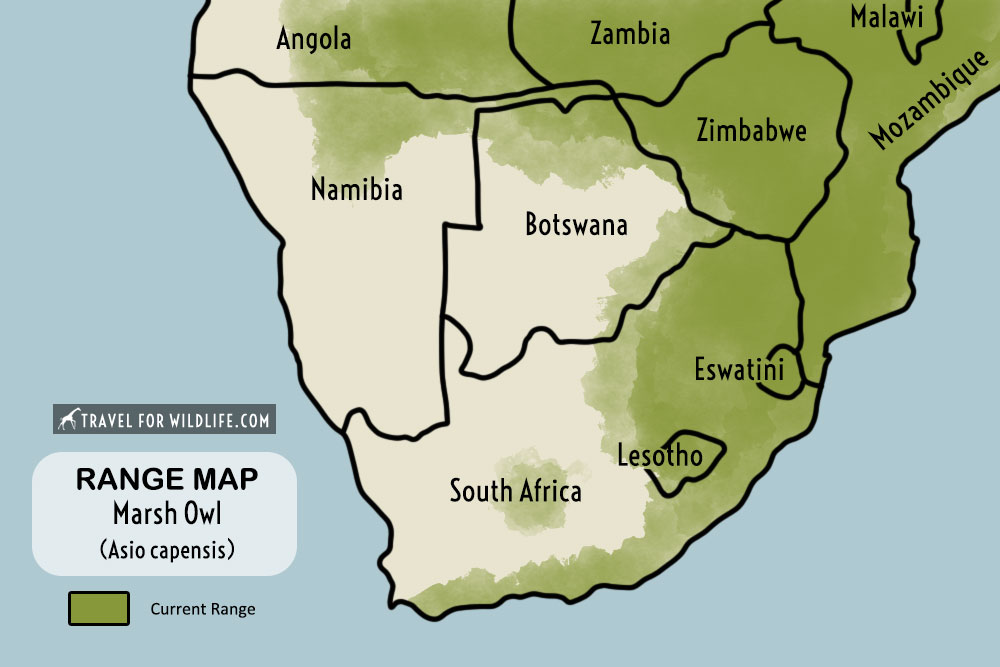 Marsh Owl range map