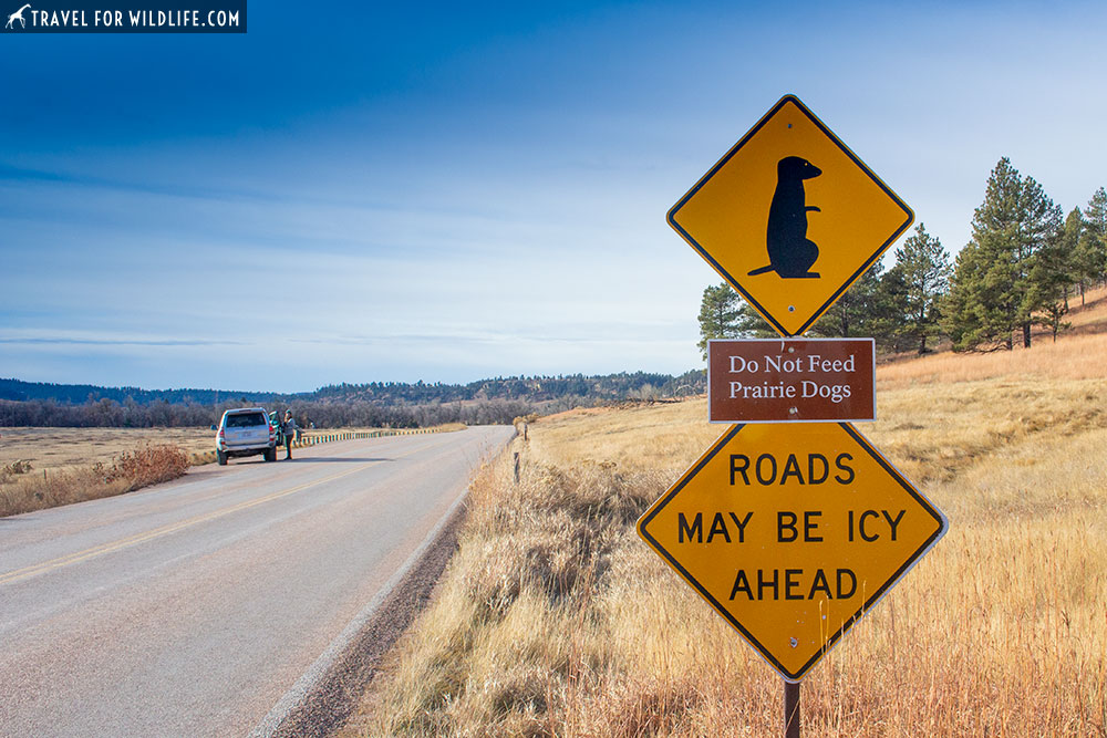 prairie dog crossing sign, devils tower