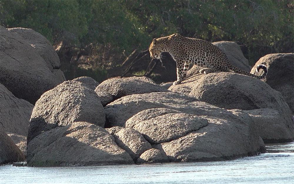 Leopard sitting on rocks