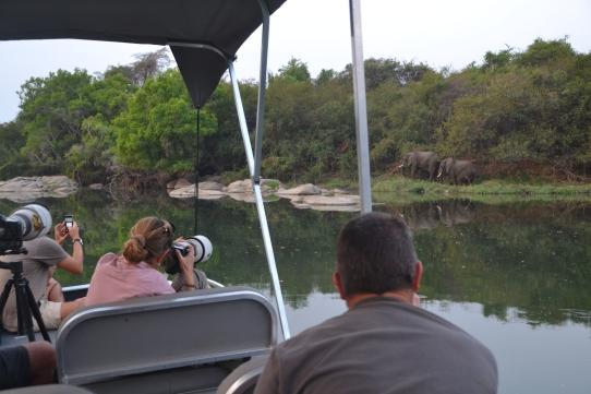 Boat watching elephants