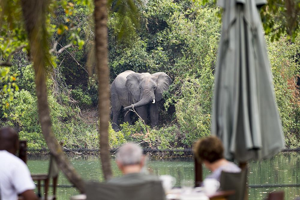 watching elephants in Zambia