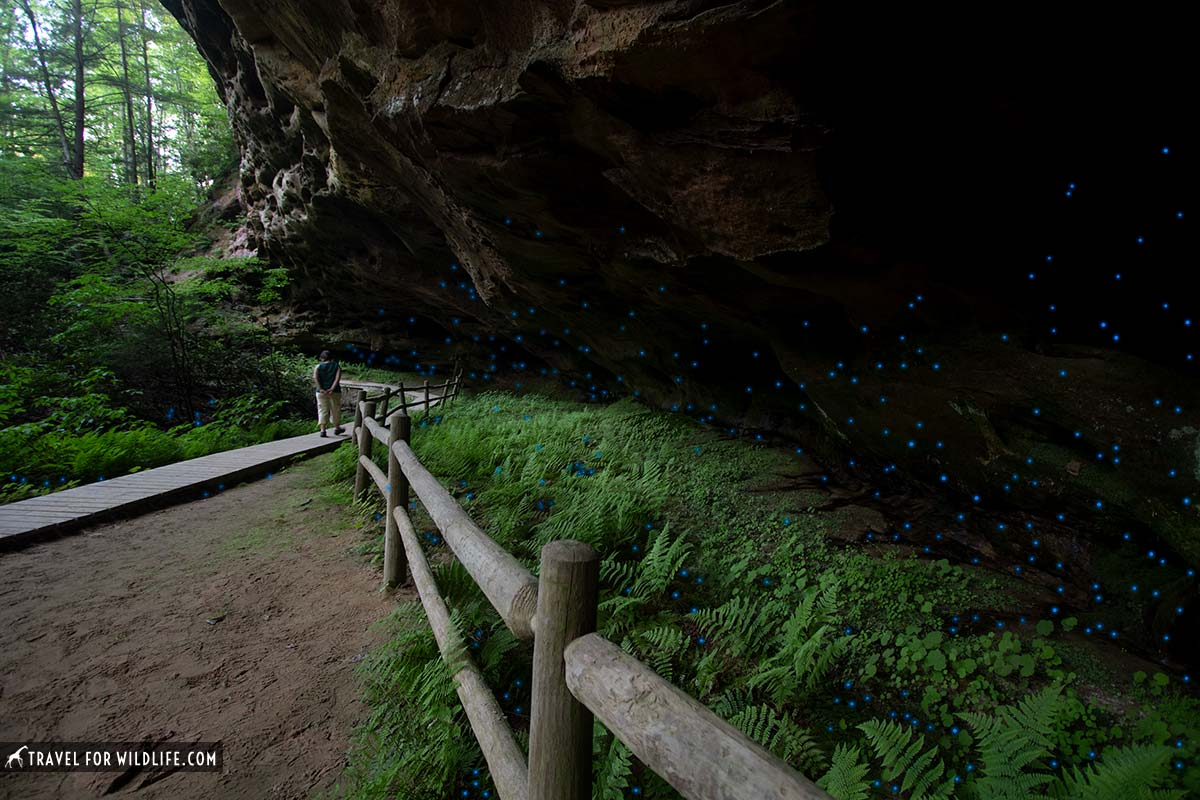 glow worm caves Tennessee