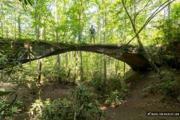 natural bridge in Pickett state park tn