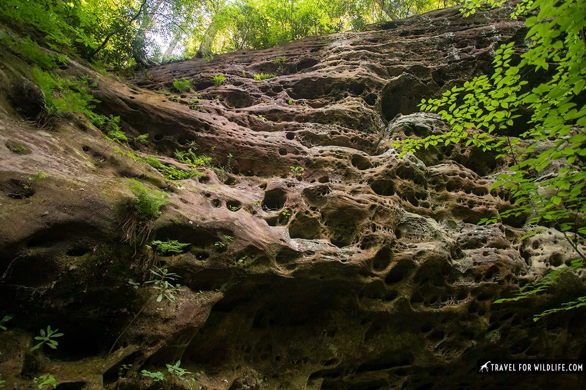 detail of sandstone cliff in Pickett State Park
