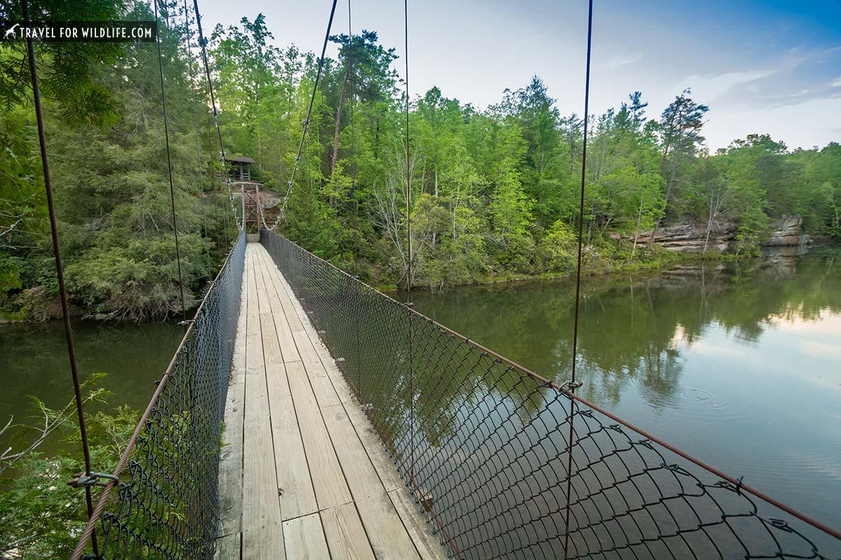 suspension bridge at Pickett